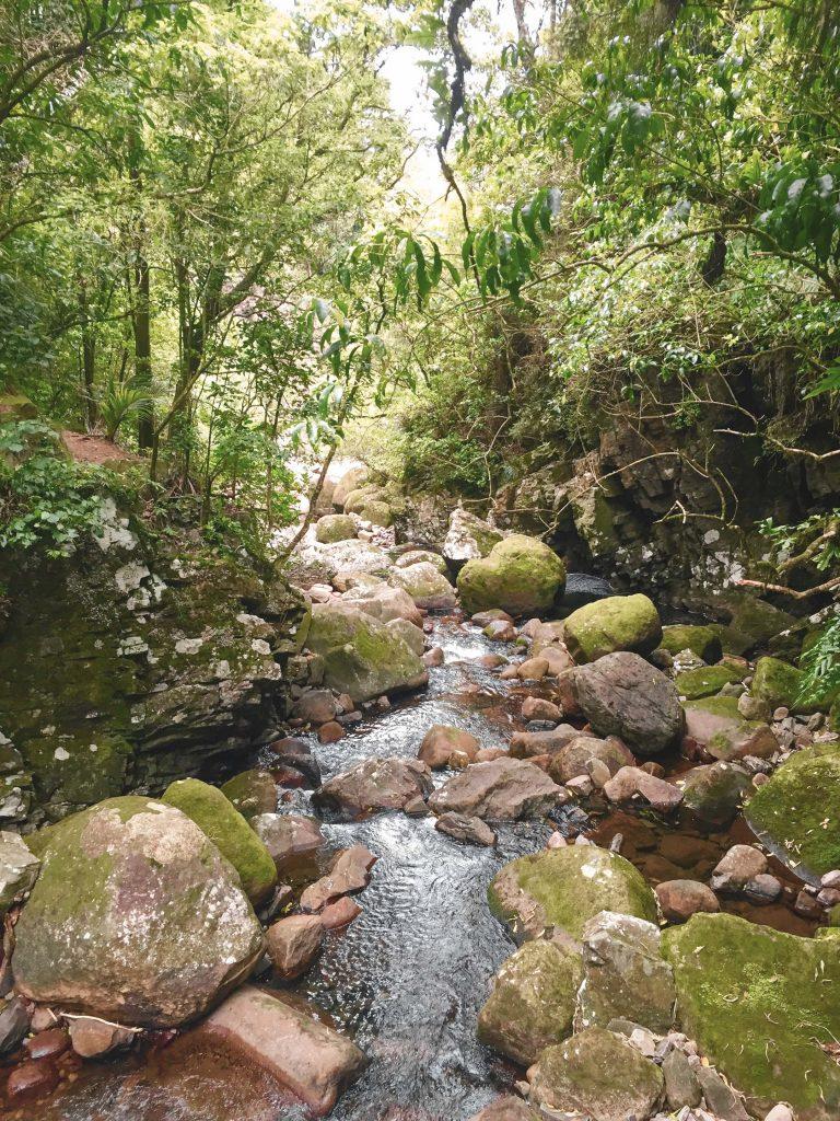 Regenwald Coromandel