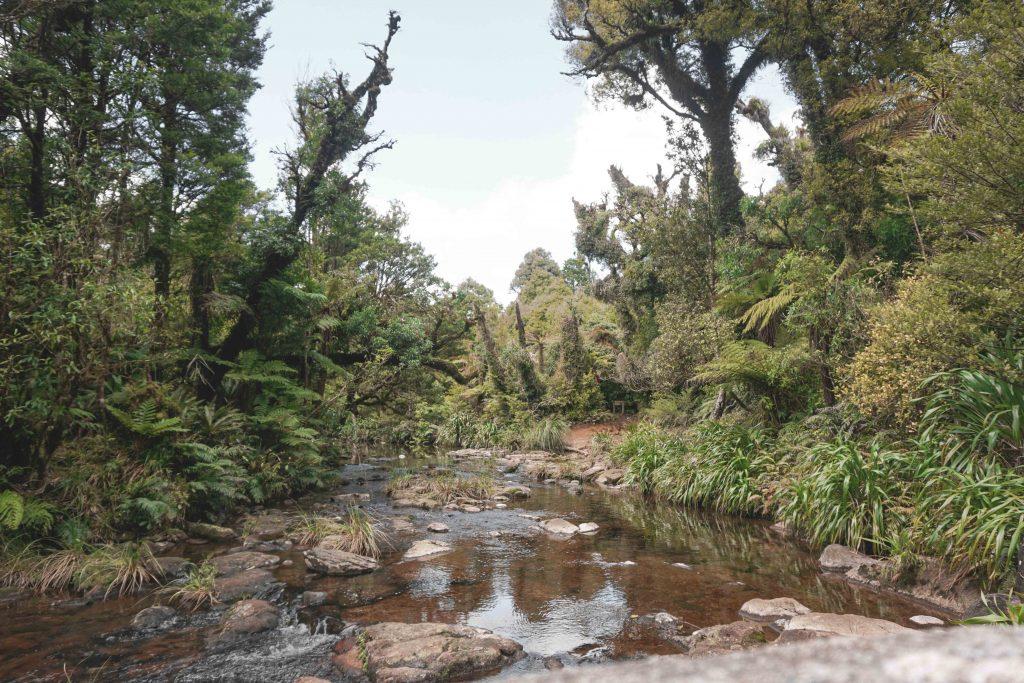Regenwald Coromandel Highlight