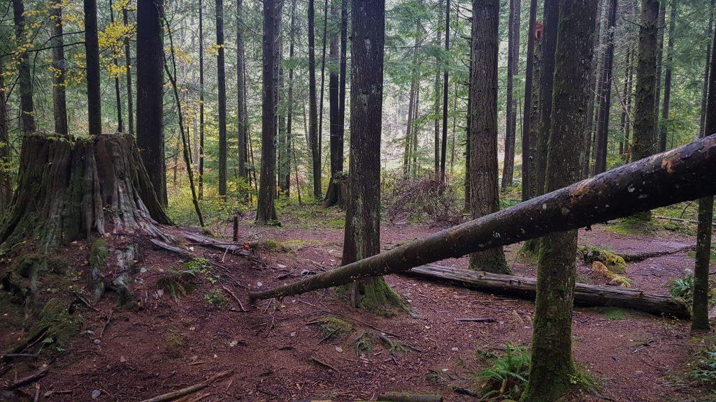 Golden Creek Trail Regenwald