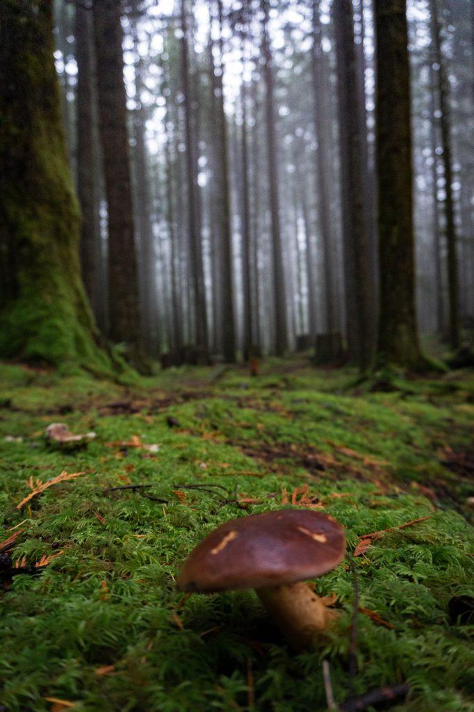 Regenwald Nebel Pilz Kanada
