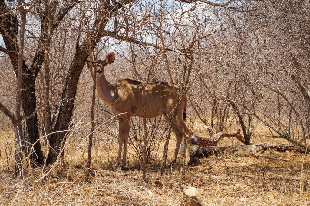 Antilope Ndlovumzi Nature Reserve