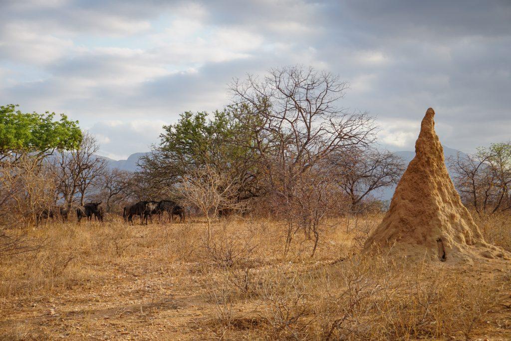 Gnus Ndlovumzi Nature Reserve
