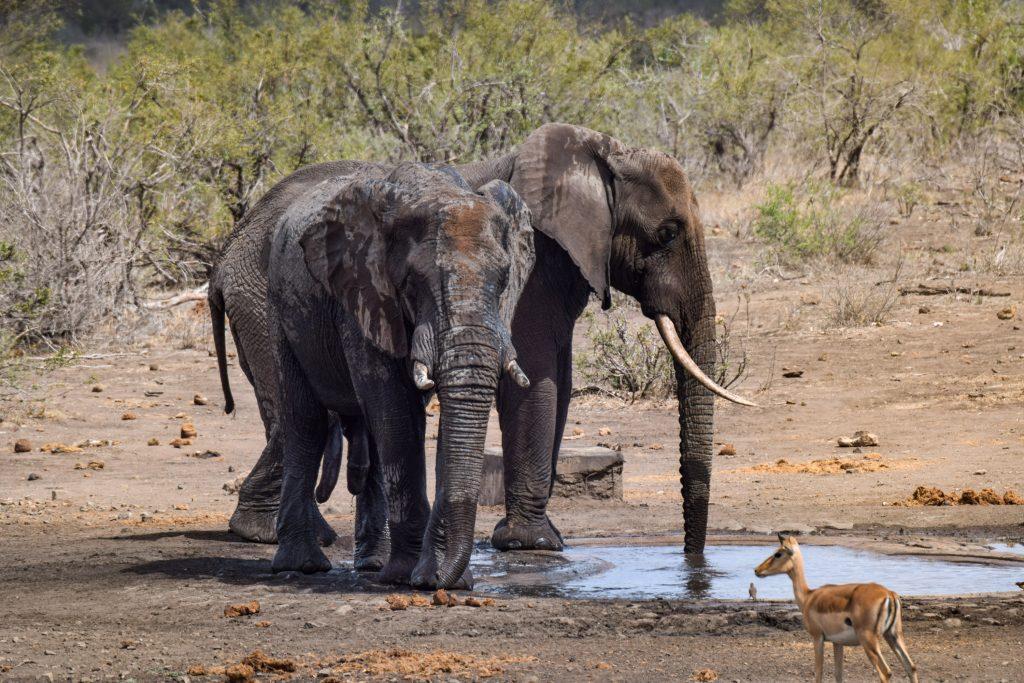 Elefanten am Wasserloch Selbstfahrer Safari