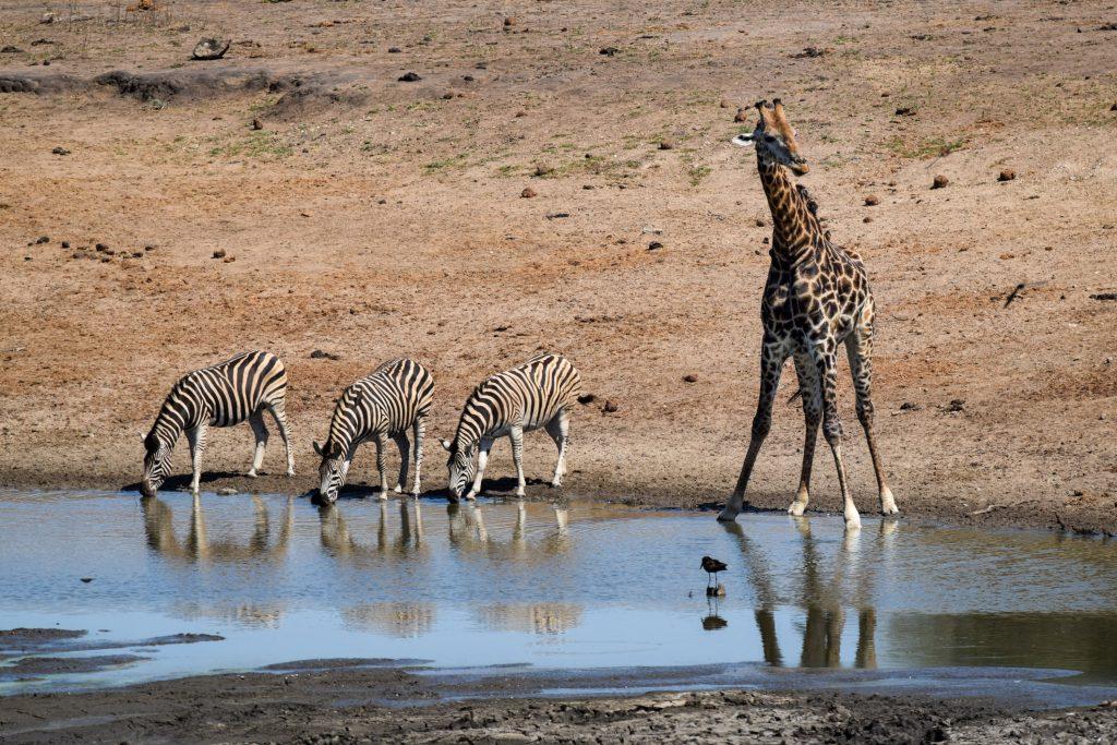 Wasserloch Winter Südafrika