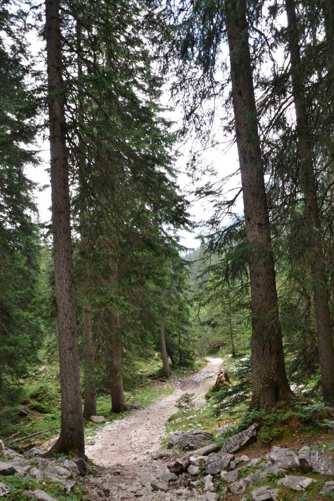 Weg durch den Wald zur Seebenalm