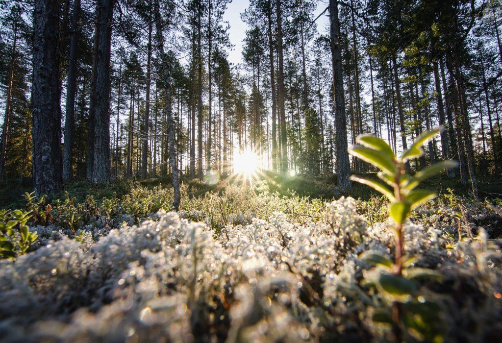 Hamra Nationalpark Skandinavien Schweden Sonnenaufgang