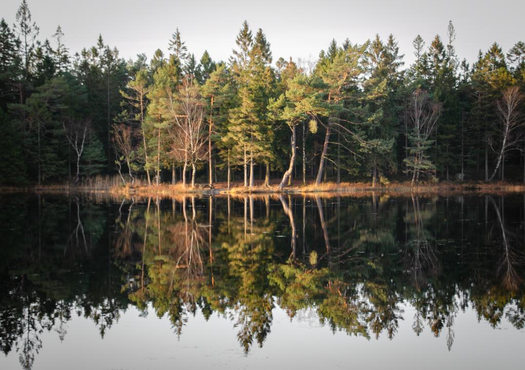 Svartedalen Nature Reserve Spiegelung Schweden Roadtrip Route Süden