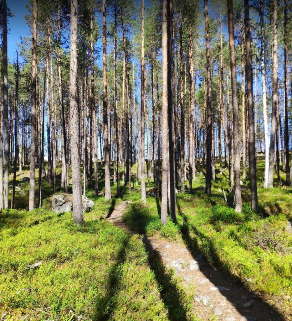 Muddus Nationalpark Schweden Wald